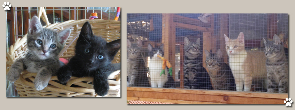 Visit Our Cattery Today
