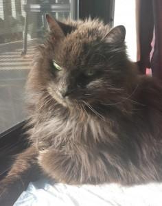 Merlin - 18 years